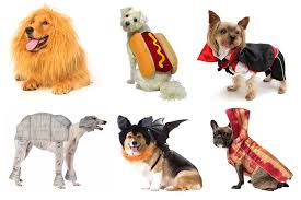 the best halloween costumes for cats and dogs london evening