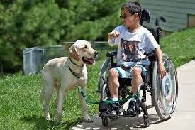 How Does A Guide Dog Help A Blind Person Service Animals For Disability Mobility
