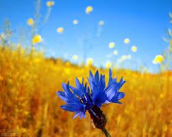 pretty wallpapers for ipad flowers blue flower summerfield lovely summer pretty desktop