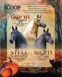 spirit halloween murfreesboro 10312016 by graphics123 issuu