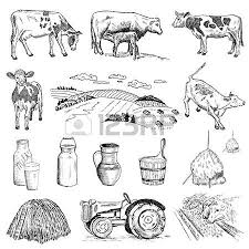 cow and milk hand drawing set of vector sketches royalty free