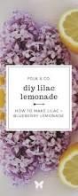 best 25 lilacs ideas on pinterest lilac plant syringa vulgaris