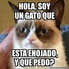 Gato Meme - meme grumpy cat hola soy un gato que esta enojado y que pedo