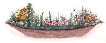 native plants for rain gardens rain to table u2014 edible baja arizona magazine