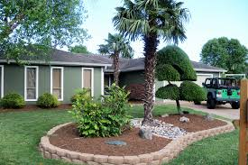 virginia beach palm tree design