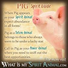 pig symbolism u0026 meaning spirit totem u0026 power animal