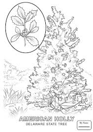 delaware state flower coloring pages delaware state flower delaware countries cultures