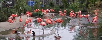 Miami Beach Botanical Garden by In And Around Miami Beach Insidemiamibeach Com