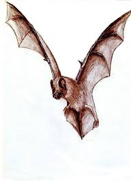vampire bat pictures free download clip art free clip art on