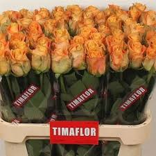 wholesale roses morning sun 80cm wholesale flowers florist supplies uk