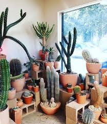 hotcactus la is my happy place regram from justinablakeney