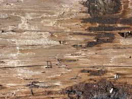 weathered wood weathered wood weathered wood wallpaper home depot simplir me