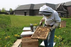 The Backyard Beekeeper Stratford The Place To Bee Beacon Herald