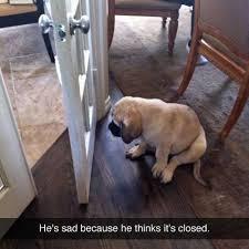 Sad Pug Meme - sad puppy meme meme rewards