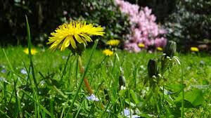How To Cut Weeds In Backyard How To Get Rid Of Weeds Weed Control Techniques The Old