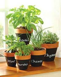 Herb Garden Pot Ideas Lofty Idea Herb Garden Pots Inside Blackboard Paint On Terracotta