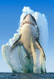 175 best shark images on pinterest great white shark shark week