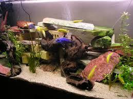 idee deco aquarium idée décor aquarium cichlidés africain