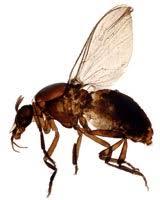 Flies In Backyard Best Ways To Get Rid Of Black Flies Getridofthings Com