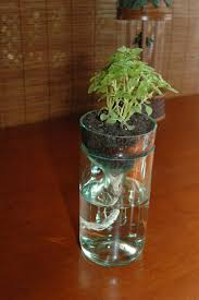 Wine Bottle Planters by Self Watering Planter Made From Recycled Wine Bottle Perfect For