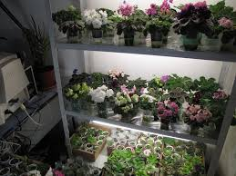 african violet grow light avse forum view topic fluorescent light for african violets