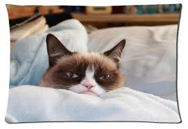 Grumpy Cat Sleep Meme - 2015 new design 50x75cm nice pillowcase grumpy cat sick on bed top