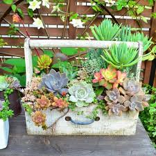 Succulent Gardens Ideas Stunning Ideas For Indoor Succulents Design Best Ideas About