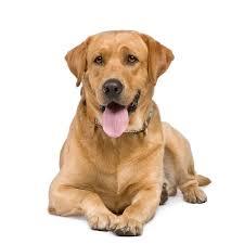 Pet 286 Best Pet Images On Pinterest Men U0027s Journal Animais And Animaux
