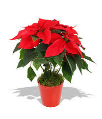 potted plants manufacturer from pune