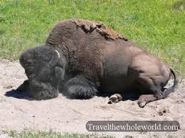 bureau des visas canada le bureau des visas du canada à buffalo ferme ses portes le