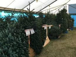 buy christmas tree where to buy live christmas trees in georgetown tx hello georgetown