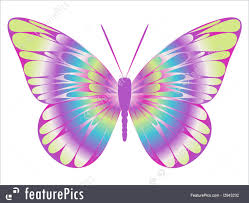 colorful butterfly stock illustration i2943232 at featurepics