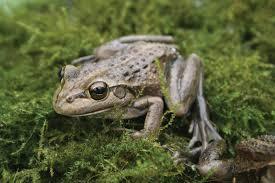 frog friendly garden perth zoo