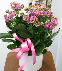 flowers delivery nyc 44 best flowers for nyc hospitals images on nyc