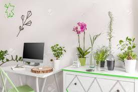 plantes bureau intérieur clair avec simple bureau ordinateur et commode décorée de