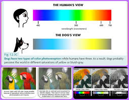 Are Dogs And Cats Color Blind Color Vision In The Animal World Dorn Color