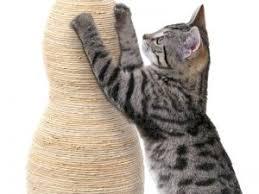 gatti divani gatti come evitare che si facciano le unghie su divani tende e