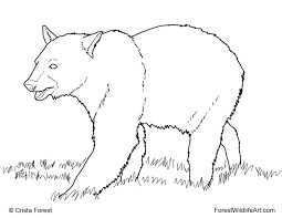 forest wildlife art coloring book page for kids black bear