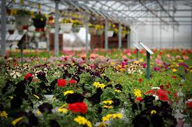 List Of Flowers by Testimonials U2013 Deneweth U0027s Garden Center
