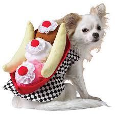 Small Dog Halloween Costumes Ideas 33 Pets Halloween Costumes Flaunt Unique Halloween Style