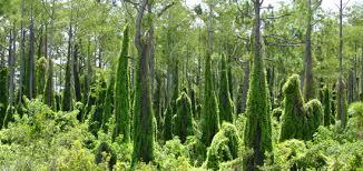 Non Invasive Climbing Plants - florida u0027s nature