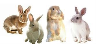 rabbit banner rabbit grooming singapore happy pet singapore