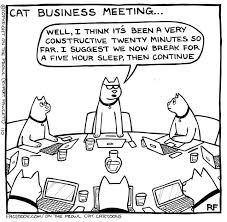 Cartoon Cat Memes - 64 best on the prowl cat cartoons images on pinterest cat cartoons