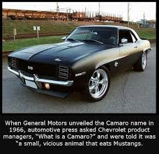 what is camaro 69 camaro ss cars vinyls chocolate brown and