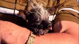 Ugliest Sweepee Ramborambo U0027 Crowned This Year U0027s Ugliest Dog At Sonoma