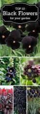 Plant Flower Garden - top 25 best outdoor gardens ideas on pinterest garden pots