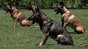 state with most dog owners 2016 police in the us shoot dogs so often that a justice department