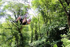 Under Canopy Rainforest by Costa Rica Canopy U0026 Zip Line Tours Rainforest Canopy Tour