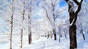 winter snow desktop wallpaper hd 49772 dongxue series