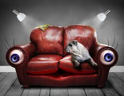 How Much Does A Sofa Cost Dog Facts 151 Interesting Facts About Dogs